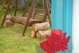 יחידה זוגית - נדנדה בחצר