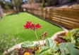 דשא סנטטי במעלה אדומים