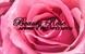 Beauty Rose - ביוטי רוז