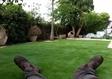 דשא סננטי במעלה אדומים