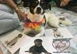 כלבה טיפולית