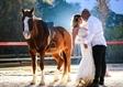 בוק לחתונה