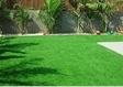 דשא סנטטי