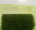 דשא סנטטי במבצע בירושלים