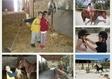 חוות סוסים מדבר יהודה
