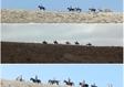 חוות סוסים מעלה אדומים