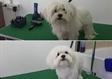 ספרית כלבים